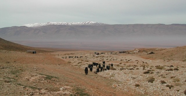 Flat or gently undulating stony desert and semi-desert, rising up to a wide wadi extending eastwards into the Anti-Lebanon Range