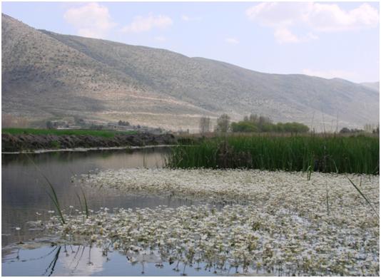 Hima KfarZabad Pic 2