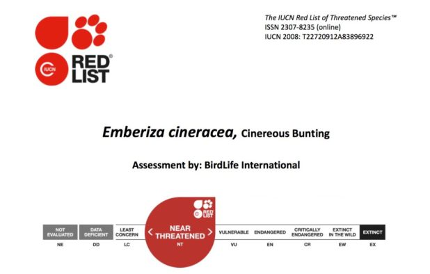 Redlist IUCN Cinereous Bunting