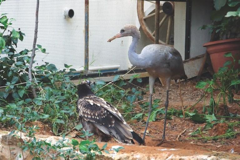 Luc Hoffmann Hima Center Birds Haven