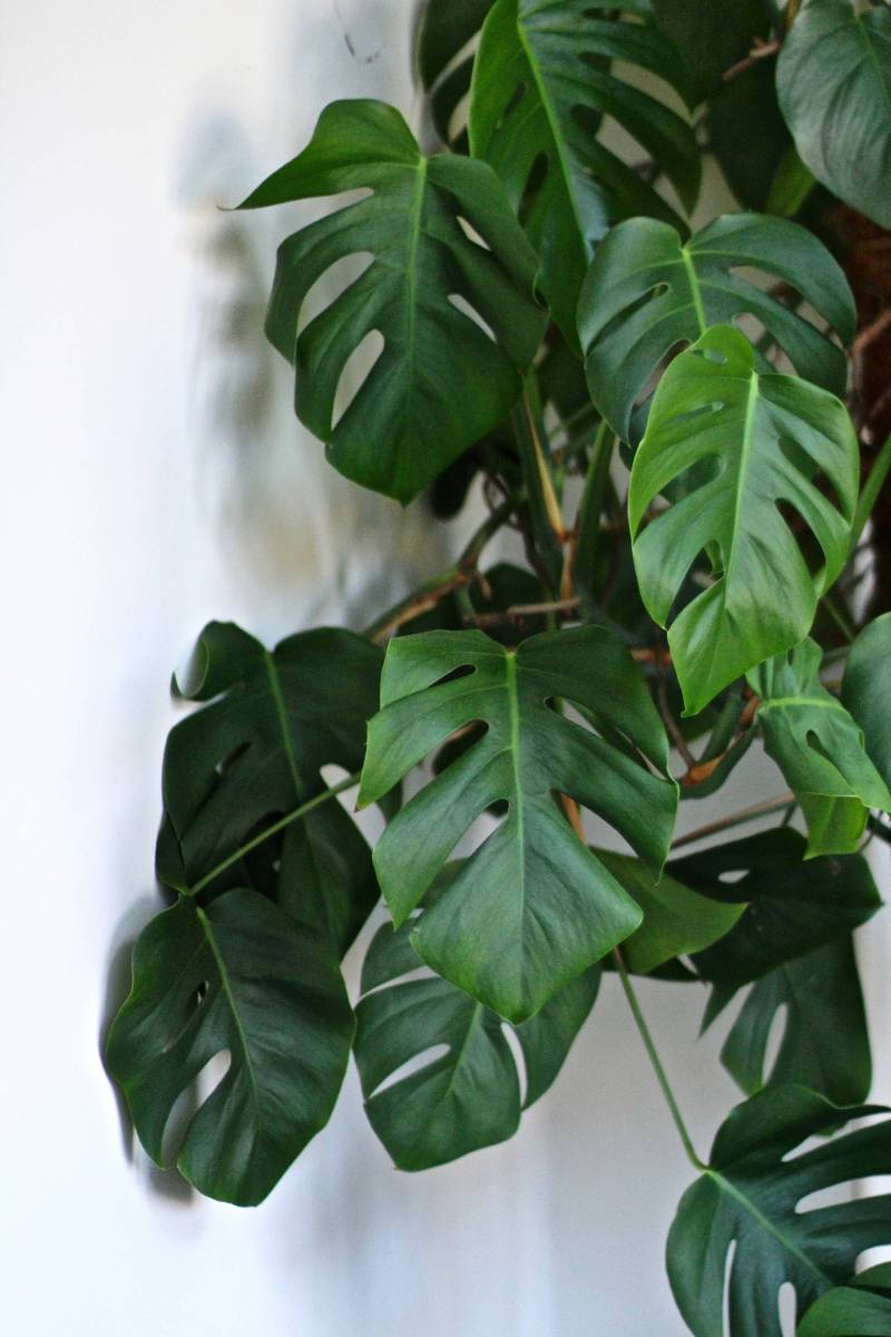 5 surprising health benefits of house plants