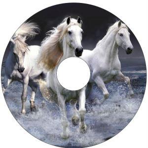 White Horses SpokeGuards