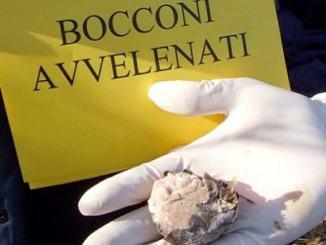 Esche avvelenate: nuove segnalazioni al comune di Spoleto