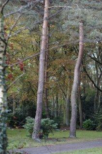 Waldfriedhof Lauheide (2)