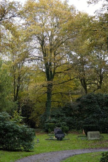 Waldfriedhof Lauheide - Vielfalt
