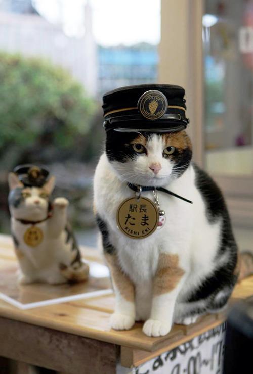 station master tama 2