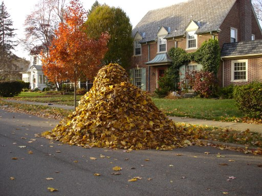 Just looking at this pile of leaves makes you want to solve a logic puzzle, doesn't it?