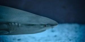 Interesting Shark Facts – Shark Week 2017