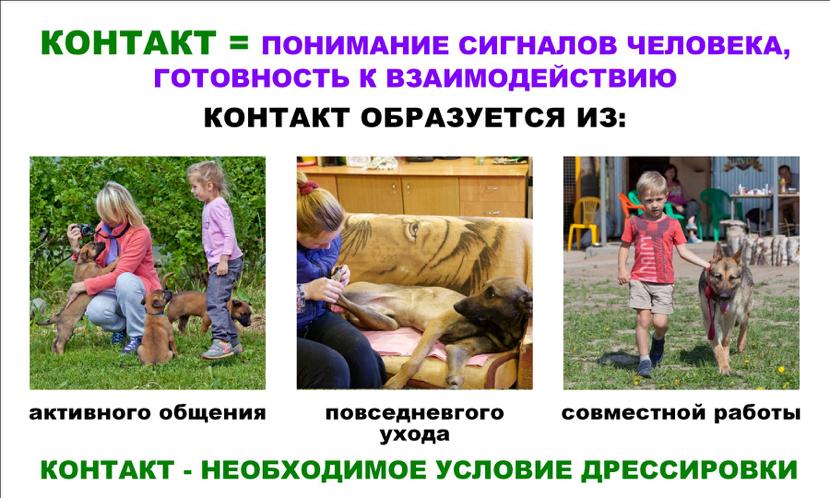 Контакт с собакой - это понимание