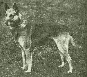 DEWET (р. 1901 г.)