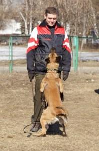 Athos of Braveheart Oradinum - obedience training