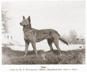 Tjop (р. 1899 г.)