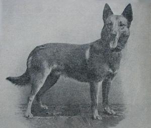 Tomy (р. 1896 г.)