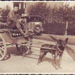 Бельгийская овчарка и торговец пивом