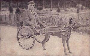 Инвалид на коляске с запряженным малинуа