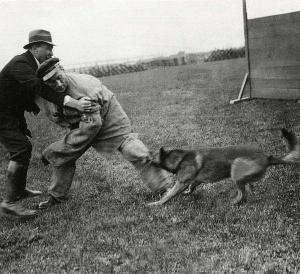 Испытания KNPV, Голландия, 1923 г.
