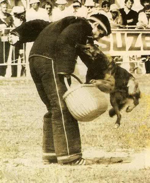Rep de la Fontaine du Buis (р. 1980 г., LOF 7262/980), призер французского ринга в 1980х гг.