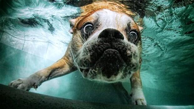 Fame e nuoto