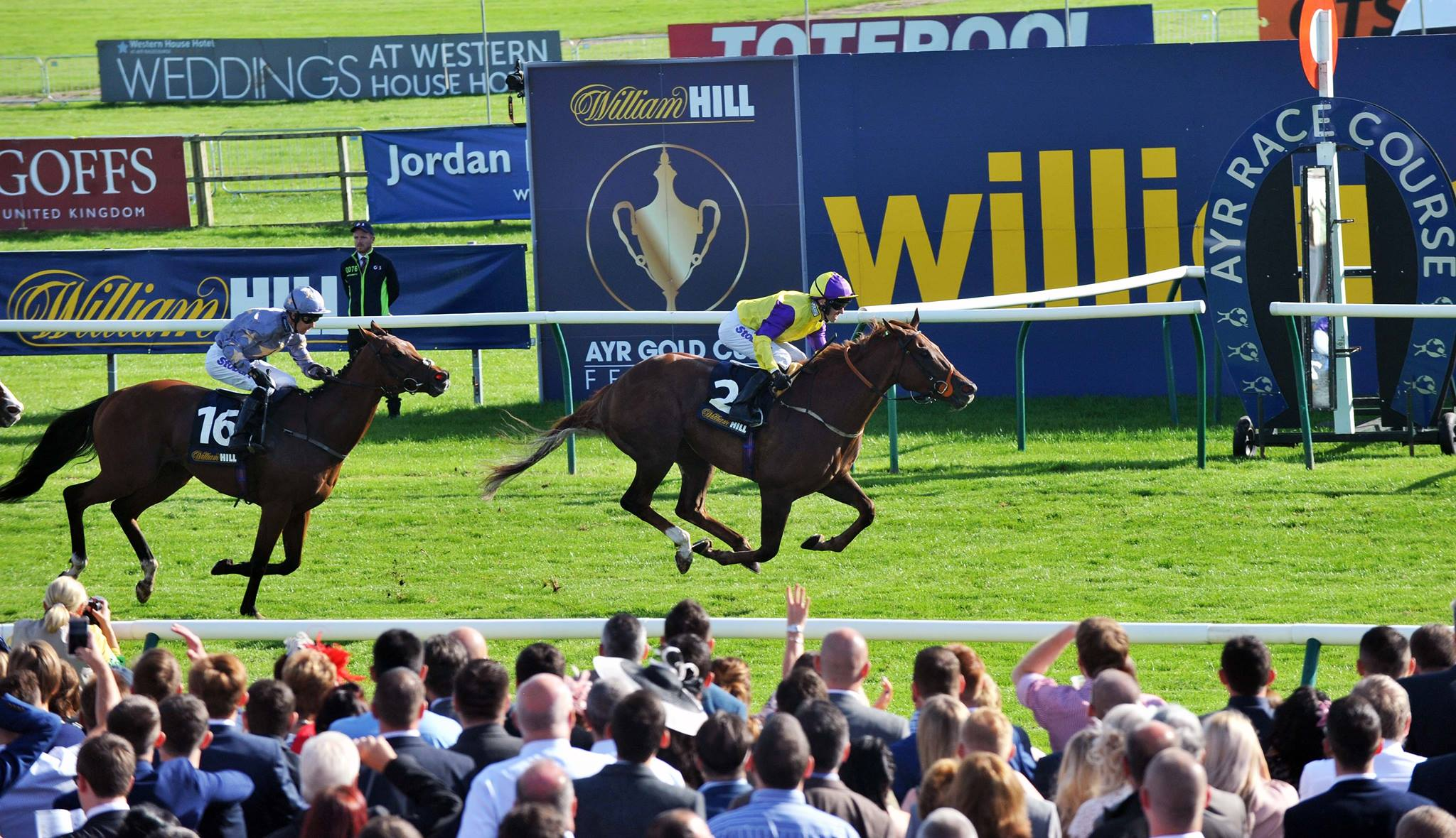 Image result for ayr gold cup