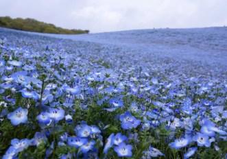 Bellissimi campi di fiori