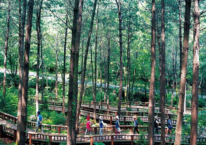 In Corea del Sud ci si cura con le foreste
