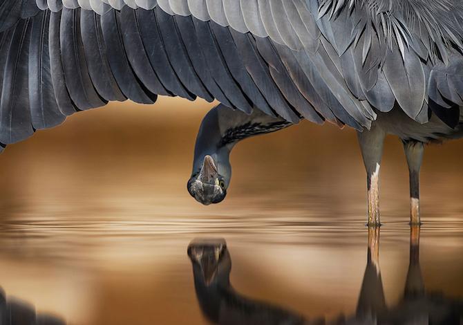 bird-photographer-of-the-year-ahmad-al-essa