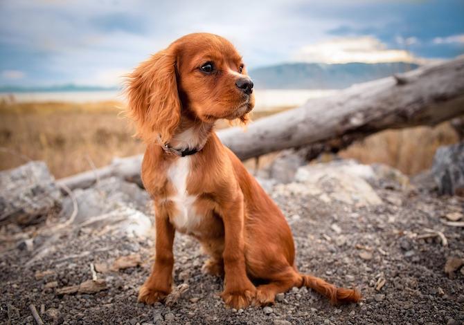 i-cani-vivono-ladolescenza-come-i-giovani-umani-ecco-come-vanno-trattati