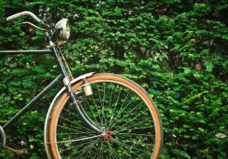 click day bonus bici