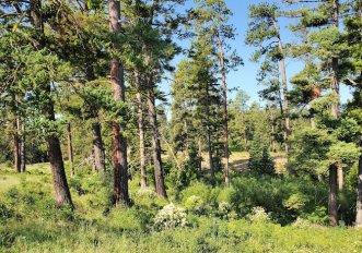 perche-gli-alberi-piu-grandi-sono-fondamentali-per-lambiente