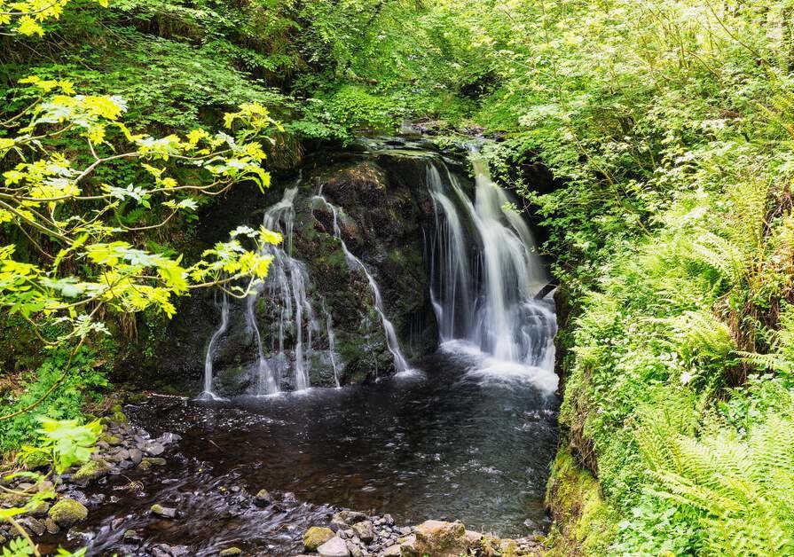 boschi e foreste in Irlanda per il forest bathing