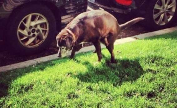 chicago-blackhawks-patrick-sharp-pooping-dog