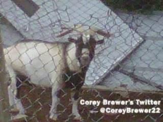 corey-brewer-goat