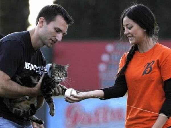 hero-cat-first-pitch
