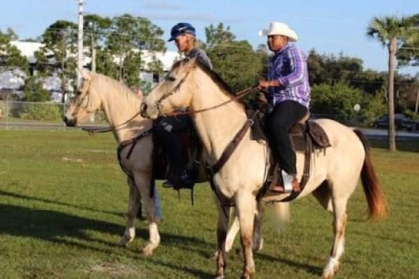 cespedes-horse