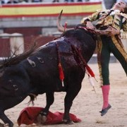 Bull Fighting Most Violent Sports in the World