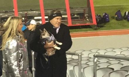 Bill Belichick's Dog Wears a Cutoff Hoodie Too