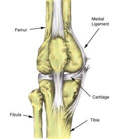 medial knee ligament sprain