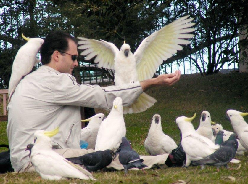 10-Cockatoos-Botanical-Gardens-Sydney