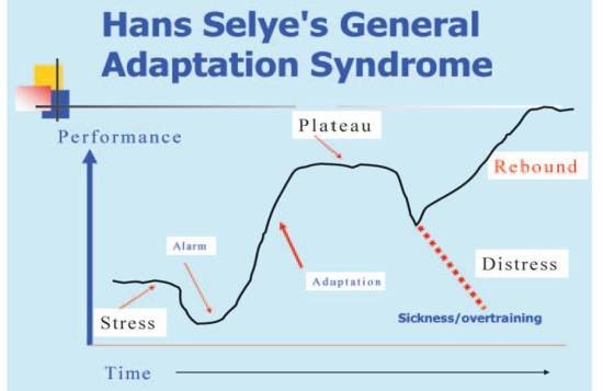 Selye Adaptation principle