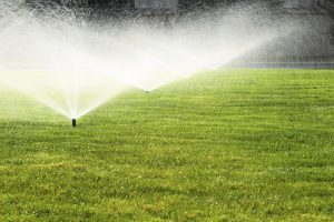 Overwatering your property can negatively impact the growth of your garden.