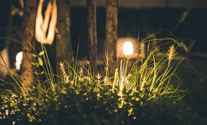 4 Things to  Know When Buying Landscape Lights