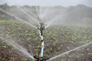 Commercial Irrigation Services: Start 2020 in Style With These High-Tech Upgrades