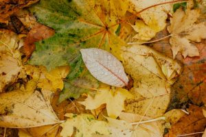 Winterization of Irrigation Systems: When is it Time?