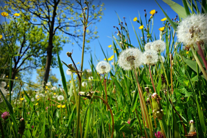 Keep Weeds Out of Your Yard This Summer
