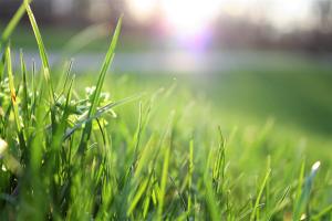 Deciphering Between Dead and Dormant Grass