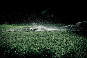 Common Issues With Landscape Drainage and How to Get Them Solved