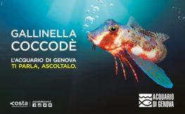gallinella coccode campagna Acquario