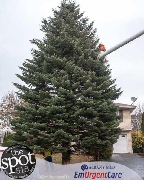 tree-6024