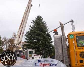 tree-6054
