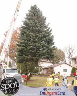 tree-6122